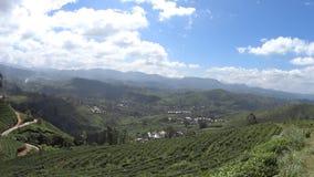 Plantaciones de té de Sri Lanka almacen de metraje de vídeo