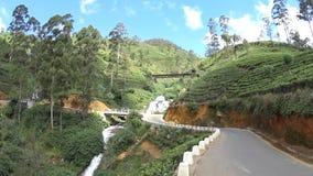 Plantaciones de té de Sri Lanka almacen de video