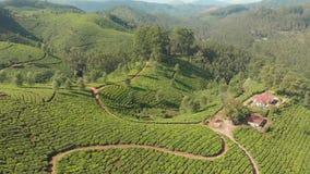Plantaciones de t? de la visi?n a?rea de la India Estado de Kerala Cerca del lago Matupetty almacen de video