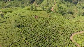 Plantaciones de t? de la visi?n a?rea de la India Estado de Kerala Cerca del lago Matupetty almacen de metraje de vídeo
