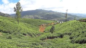 Plantaciones de t? de Sri Lanka