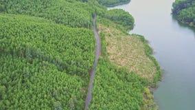 Plantaciones del árbol del papel de visión aérea por el camino a lo largo de la cala del lago almacen de video