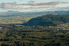 Plantaciones del bosque en Rotorua imagen de archivo libre de regalías