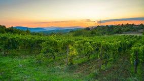 Plantaciones grandes de uvas en las montañas en el fondo de la puesta del sol Foto de archivo