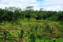 plantacja obraz royalty free