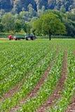 plantacja Zdjęcie Stock