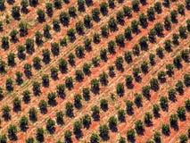 plantacja orange Zdjęcia Stock
