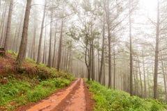 Plantacja w mgle Fotografia Stock