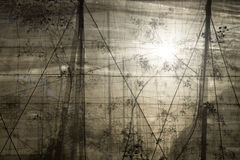 Plantacja z backlight za siecią obrazy stock