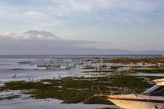 Plantacje gałęzatka przy niskim przypływem, Agung wulkan w tle, Nusa Penida, Indonezja Zdjęcie Royalty Free