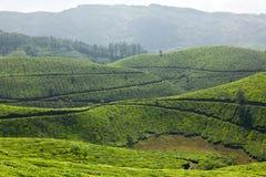 plantacje herbaciane fotografia stock