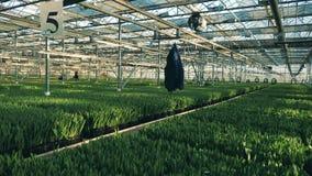 Plantacje zielone rośliny w masywnym greenery zbiory wideo