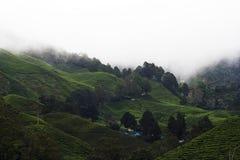 plantacji herbaty. Zdjęcie Stock