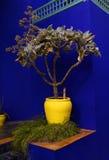 Plantador amarillo vivo, Marrakesh Foto de archivo libre de regalías