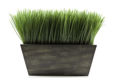 Plantador com grama Imagens de Stock