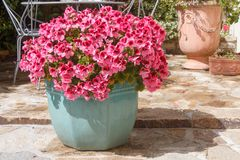 Plantador con las flores rosadas del geranio fotos de archivo libres de regalías