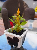 Plantador de cerámica Foto de archivo
