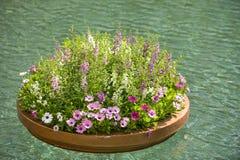 Plantador de flutuação das flores Fotografia de Stock