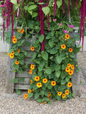 Plantador de madeira com as flores do fim do verão Fotos de Stock