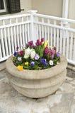 Plantador de pedra com flores da mola Fotografia de Stock Royalty Free