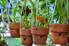 Plantador de suspensão Foto de Stock Royalty Free