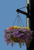 Plantador de suspensão com as flores roxas, amarelas, e alaranjadas Fotos de Stock Royalty Free