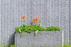 Plantador del borde de la carretera con los tulipanes florecientes Fotografía de archivo libre de regalías