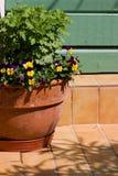 Plantador do Pansy Fotografia de Stock