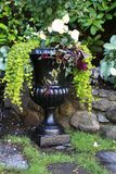 Plantador elegante de la begonia Imagenes de archivo