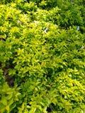 Plantador em torno das árvores para dar mais vida no parque fotografia de stock royalty free