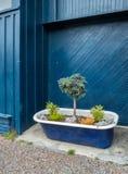 Plantador urbano da banheira fotos de stock