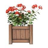 Plantador vermelho do gerânio no branco Imagens de Stock