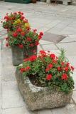 Plantadores concretos con las flores fotografía de archivo
