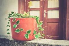 Plantadores da porta da rua fotografia de stock