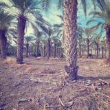 plantage Stockbilder