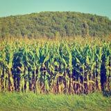 plantage Lizenzfreies Stockfoto