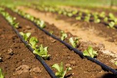 Plantage Stockfoto