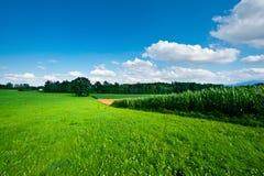 Plantage im Bayern Lizenzfreies Stockbild