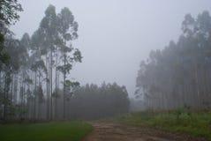 Plantage im Nebel Lizenzfreie Stockfotos
