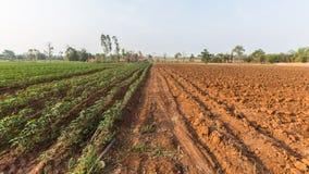 Plantage, Manioka Lizenzfreies Stockbild