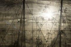 Plantage mit Hintergrundbeleuchtung hinter dem Netz Stockbilder