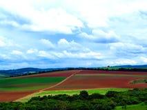 Plantage von allgemeinen Bergwerken im Sojabohnenöl stockfoto
