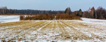Plantage von jungen Bäumen im Winter stockfotos