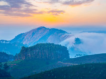 Plantagen des grünen Tees in Munnar, Kerala, Indien Stockfotografie
