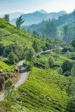Plantages de thé en collines vertes dans l'Inde Images libres de droits