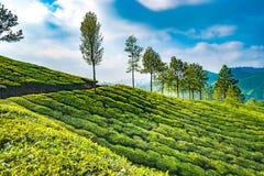 Plantages del té en Munnar imagen de archivo