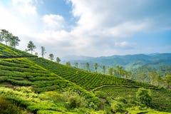 Plantages del té en Munnar, Kerala, la India fotografía de archivo