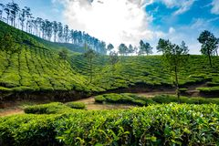 Plantages del té en Munnar, Kerala, la India fotos de archivo libres de regalías