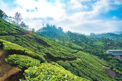 Plantages del té en Munnar, Kerala, la India imagenes de archivo