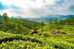 Plantages del té en Munnar, Kerala, la India fotografía de archivo libre de regalías